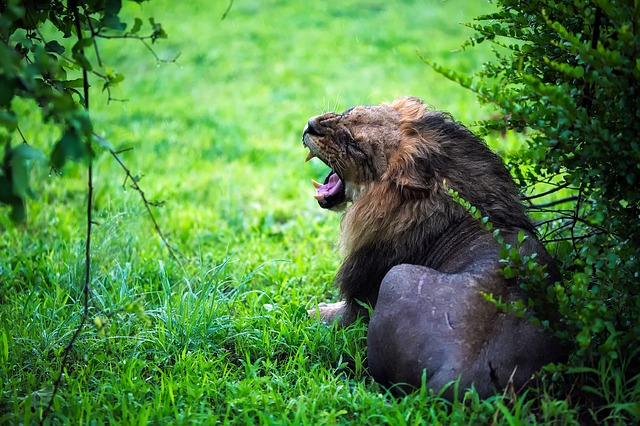 The day you find your growl?
