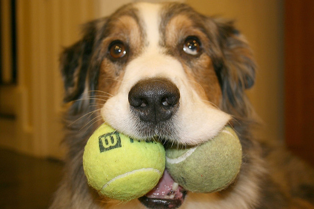 Cortisol and the tennis match in your head